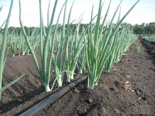 Регулярная подача влаги растениям при помощи пластиковых труб