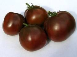 Томаты Черный принц: описание сорта и технология выращивания