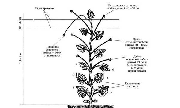 Как вырастить рассаду огурцов зимой для высадки ее в теплицу?
