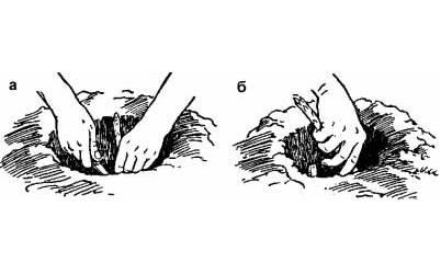 Как выращивать спаржу