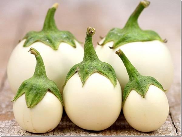 Особенности выращивания белых баклажан
