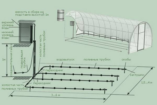 Как выращивать лук-порей из семян?