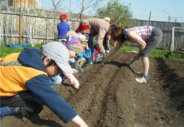 Апрельские хлопоты на огородных грядках