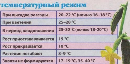 Как ухаживать за тепличными огурцами