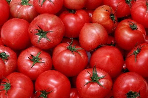 Какую температуру выдерживает рассада томатов: мнения специалистов