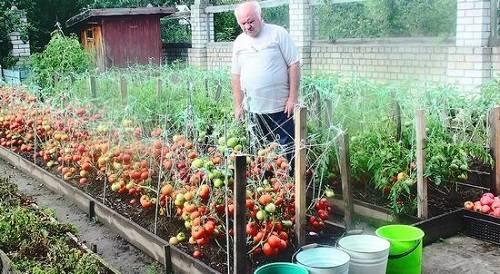 Уход за огородом в августе