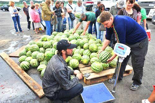 Как в торговой точке выбрать арбуз без нитратов?