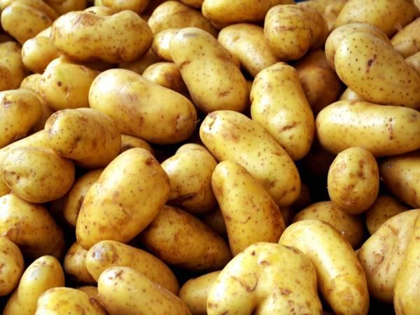 Отличия и описание сорта картофеля Жуковский