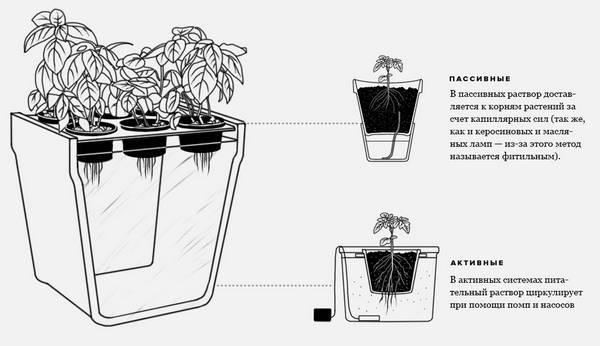 Выращивание горького перца