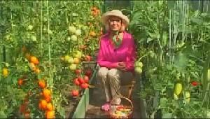 Выращивание рассады болгарского перца на даче - видео